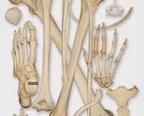 صوره عدد عظام جسم الانسان , شي عجيب فعلا وغريب