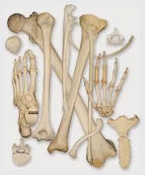 صورة عدد عظام جسم الانسان , شي عجيب فعلا وغريب