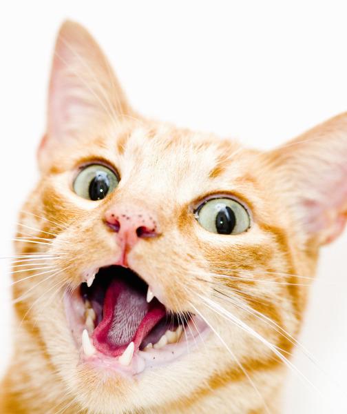 بالصور حقائق لا تعرفها عن القطط موجودة في كل قط وقطة 75 2