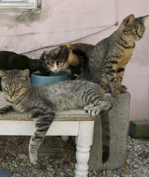 بالصور حقائق لا تعرفها عن القطط موجودة في كل قط وقطة 75 4