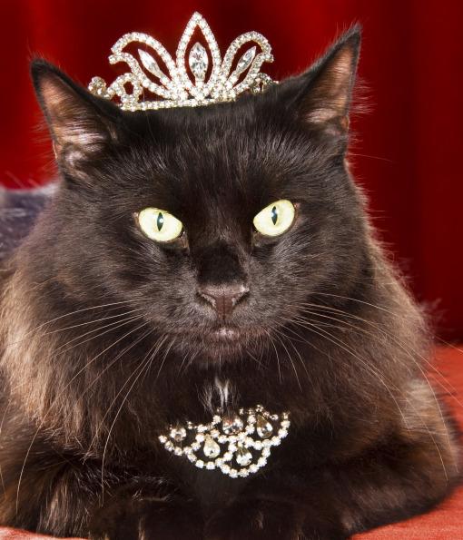بالصور حقائق لا تعرفها عن القطط موجودة في كل قط وقطة 75 5