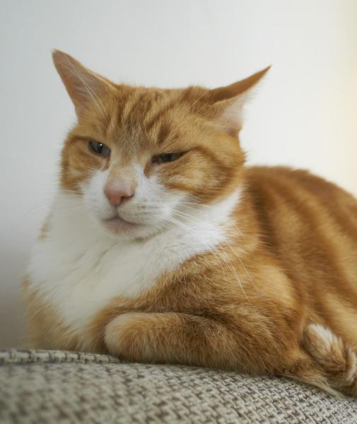 بالصور حقائق لا تعرفها عن القطط موجودة في كل قط وقطة 75 6