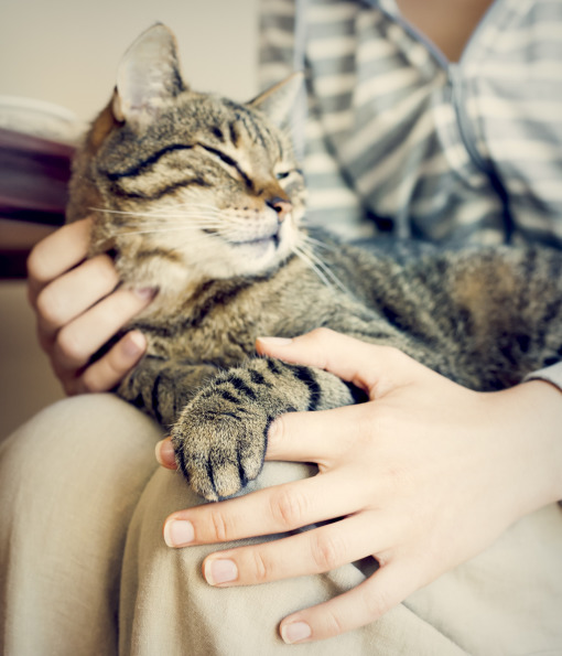 بالصور حقائق لا تعرفها عن القطط موجودة في كل قط وقطة 75 8