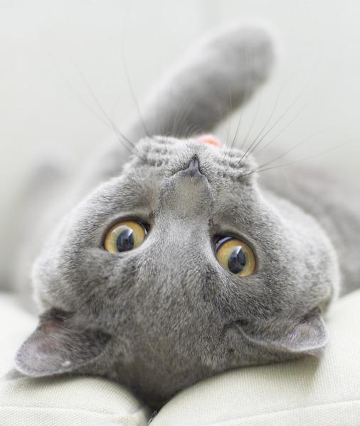 بالصور حقائق لا تعرفها عن القطط موجودة في كل قط وقطة 75 9