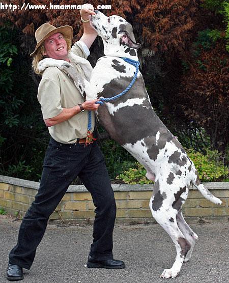 بالصور انواع الكلاب و اسعارها واسمائها سواء الاليفة او المتوحشة ومعلومات عن كل كلب بالصور 153 3