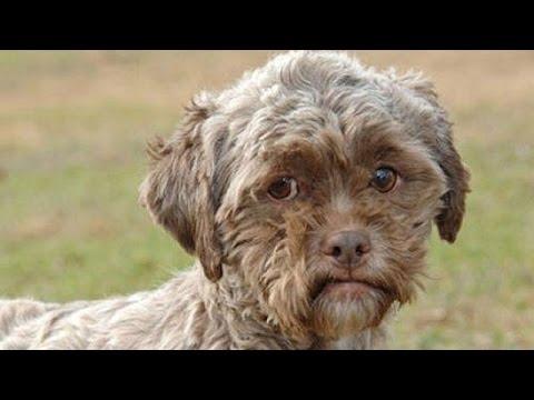 بالصور انواع الكلاب و اسعارها واسمائها سواء الاليفة او المتوحشة ومعلومات عن كل كلب بالصور 153 4