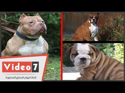 بالصور انواع الكلاب و اسعارها واسمائها سواء الاليفة او المتوحشة ومعلومات عن كل كلب بالصور 153 9