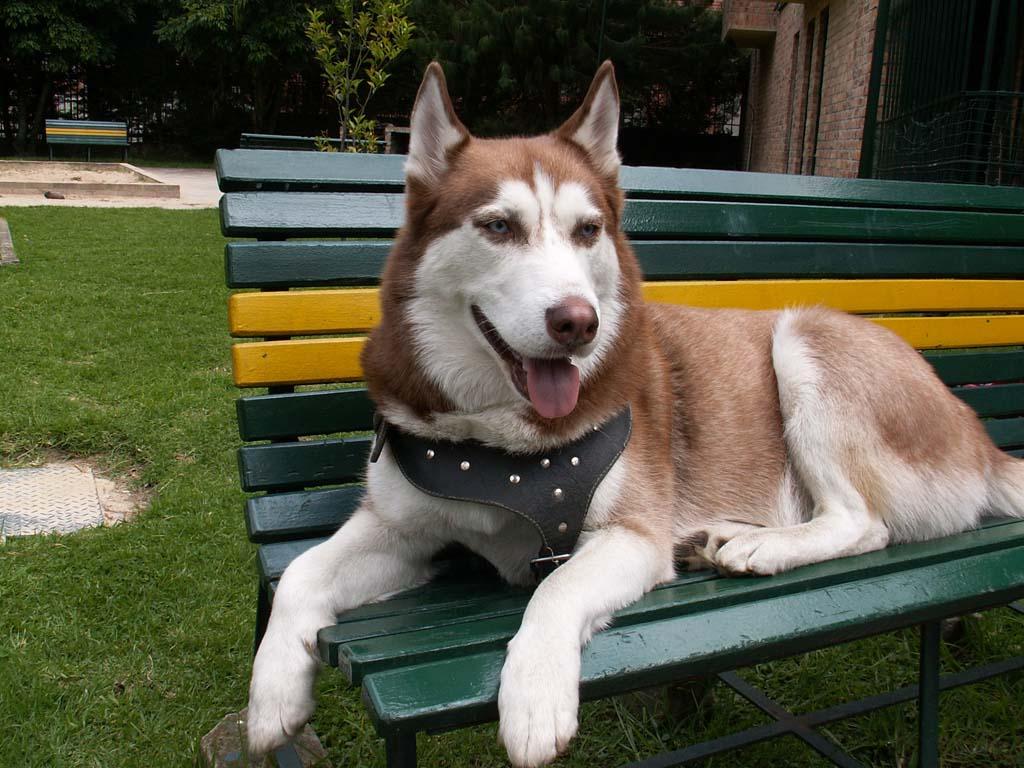 صوره انواع الكلاب و اسعارها واسمائها سواء الاليفة او المتوحشة ومعلومات عن كل كلب بالصور