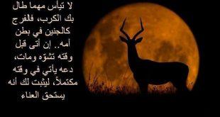 بالصور صور امثال جزائرية , امثال مصورة عن شعب الجزائر 242 10 310x165