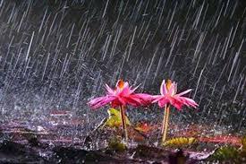 بالصور صور عن الامطار , اجمل صور مطر 281 17