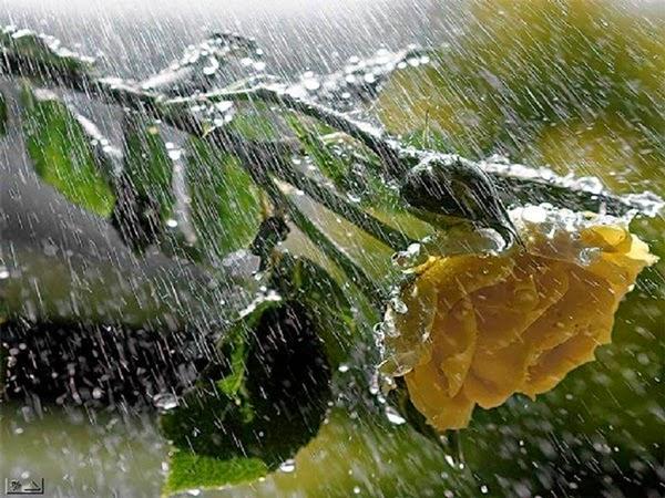 بالصور صور عن الامطار , اجمل صور مطر 281 2