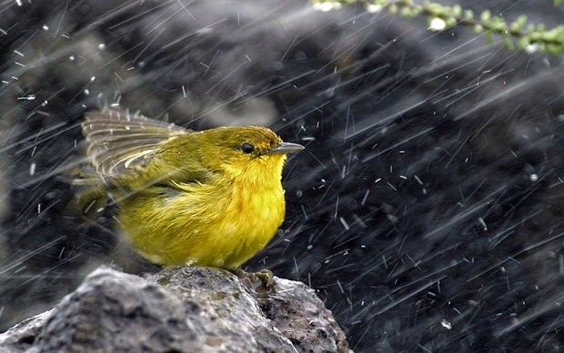 بالصور صور عن الامطار , اجمل صور مطر 281 3