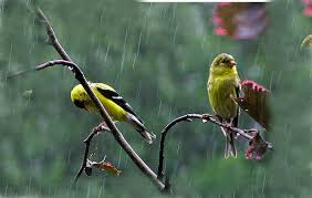 بالصور صور عن الامطار , اجمل صور مطر 281 9