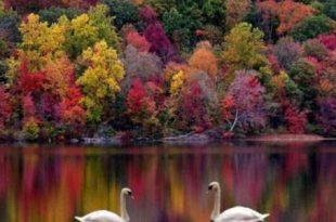 صوره تحضير النص التواصلي الطبيعة من خلال الشعر الجاهلي , تحضير نص الطبيعة ووصفها