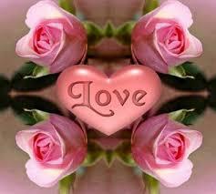صور اسماء الزهور العربية , تعرف على اسامى الورود العربية