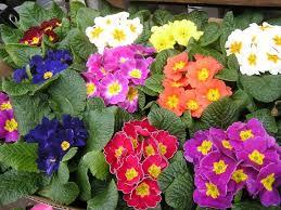 بالصور اسماء الزهور العربية , تعرف على اسامى الورود العربية 330 2
