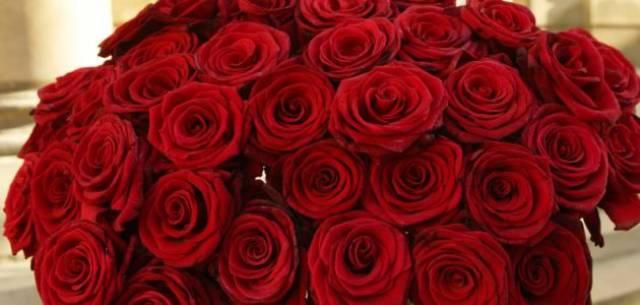بالصور تحميل صور ورد مجانا , اجمل صور الازهار الراقية 349 6