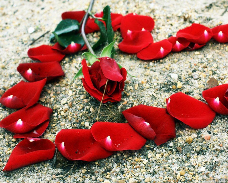 بالصور اجمل الصور رومانسيه , بوستات حب رائعة 498 7