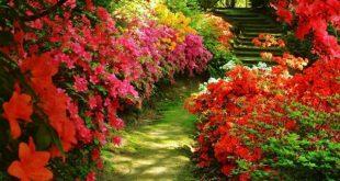 صور جميلة عن الطبيعة , اجمل المناظر الطبيعية الجذابة