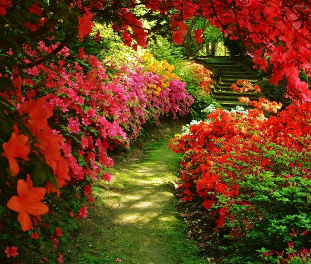 صورة صور جميلة عن الطبيعة , اجمل المناظر الطبيعية الجذابة