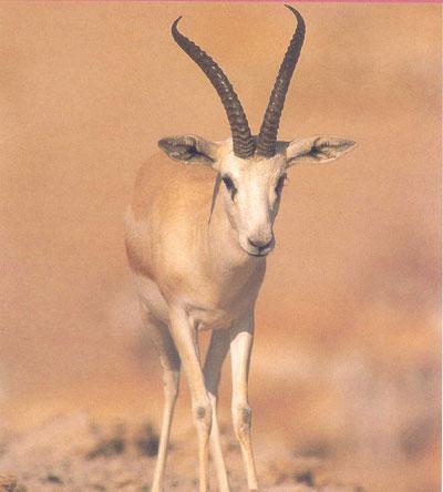 بالصور الحيوانات اللتي تبدا بحرف ر الراء , وكل حيوان اول حرف منه راء 122