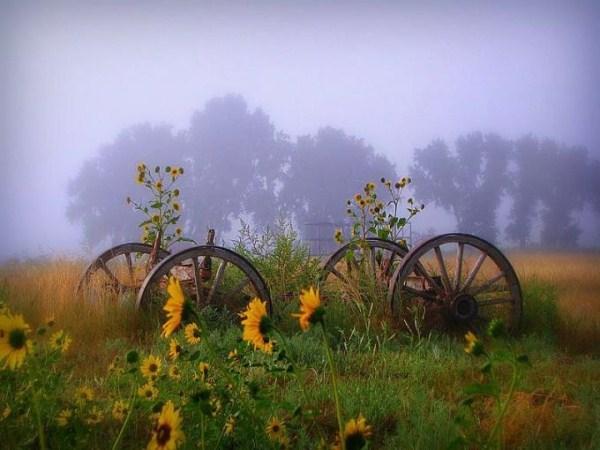 بالصور صور نسمات الصباح , الهواء العليل و الصفاء الجميل 1582 4