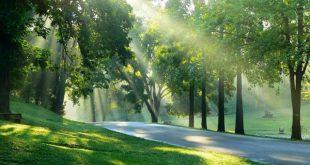 صور نسمات الصباح , الهواء العليل و الصفاء الجميل
