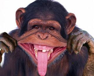 صور صور حيوانات مضحكة , اشرح صدرك واضحك من قلبك