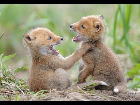 بالصور صور حيوانات مضحكة , اشرح صدرك واضحك من قلبك 1599 2