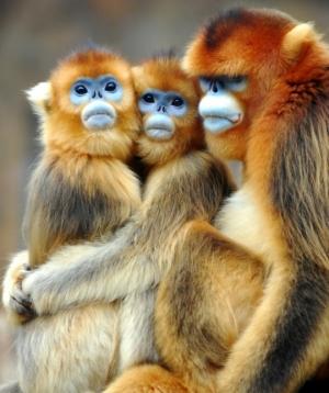 بالصور صور حيوانات مضحكة , اشرح صدرك واضحك من قلبك 1599 8