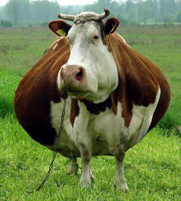 بالصور صور حيوانات مضحكة , اشرح صدرك واضحك من قلبك 1599 9