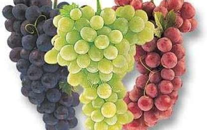 بالصور صور عنقود عنب , شوف جمال الفاكهة الصيفية اللذيذة 1626 7