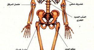 صورة صور جسم الانسان , تامل عظمة القادر و تركيب البشر المعقد