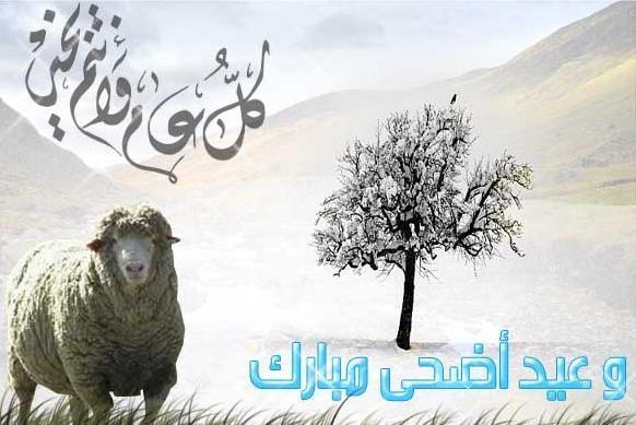 بالصور صور عيد الضحى , الحج و الاضحية ابرز شعائر المناسبة دى 2723 6