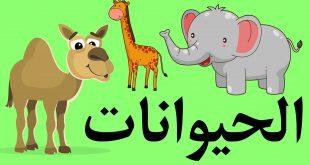 صور حيوانات للاطفال , طريقة مختلفة ومتميزة لتعليم اولادنا