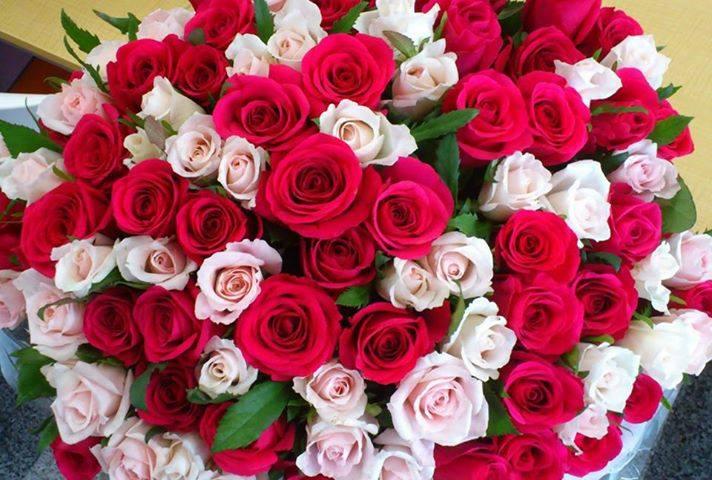 بالصور صور ورد جميل , اهدي حبيبتك زهرة لتعبر عن لهفة حبك لها 1808 3