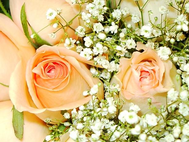 بالصور صور ورد جميل , اهدي حبيبتك زهرة لتعبر عن لهفة حبك لها 1808 4