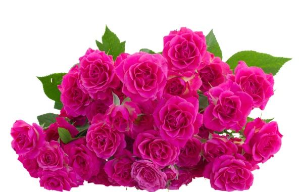 بالصور صور ورد جميل , اهدي حبيبتك زهرة لتعبر عن لهفة حبك لها 1808 7