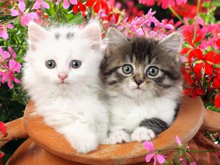 صوره صور قطط صغيرة , قطقوطى النونو ما فيش فى جمالها