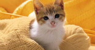 صور قطط صغيرة , قطقوطى النونو ما فيش فى جمالها
