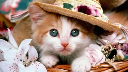 بالصور صور قطط صغيرة , قطقوطى النونو ما فيش فى جمالها 2226 2