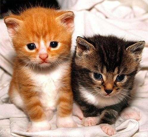 بالصور صور قطط صغيرة , قطقوطى النونو ما فيش فى جمالها 2226 3