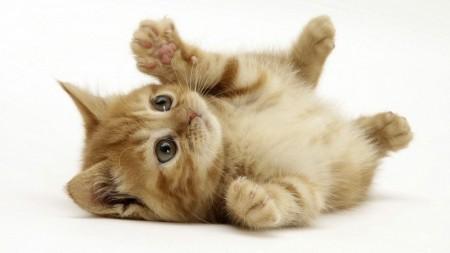 بالصور صور قطط صغيرة , قطقوطى النونو ما فيش فى جمالها 2226 4