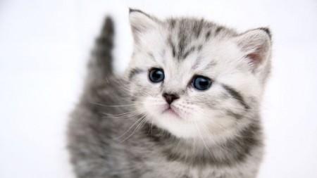 بالصور صور قطط صغيرة , قطقوطى النونو ما فيش فى جمالها 2226 5