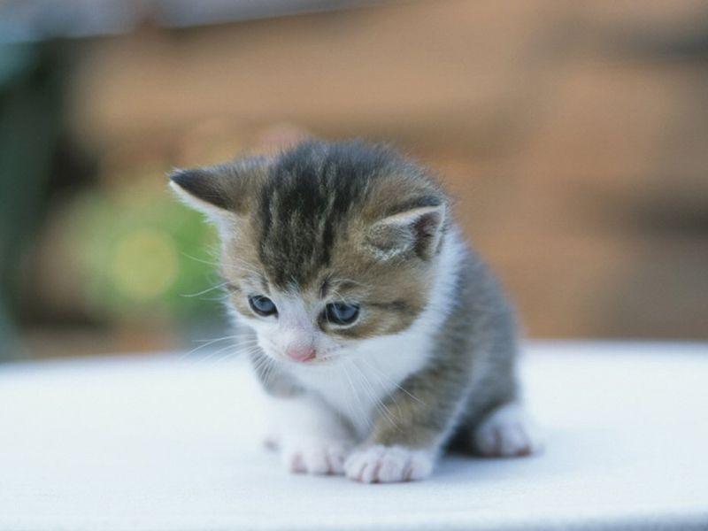 بالصور صور قطط صغيرة , قطقوطى النونو ما فيش فى جمالها 2226 6