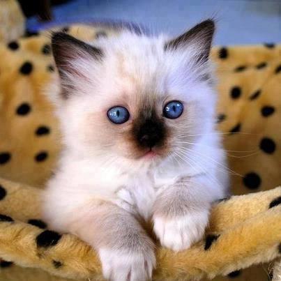 بالصور صور قطط صغيرة , قطقوطى النونو ما فيش فى جمالها 2226 7