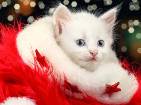 بالصور صور قطط صغيرة , قطقوطى النونو ما فيش فى جمالها 2226 8