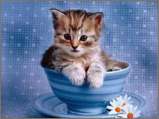بالصور صور قطط صغيرة , قطقوطى النونو ما فيش فى جمالها 2226 9