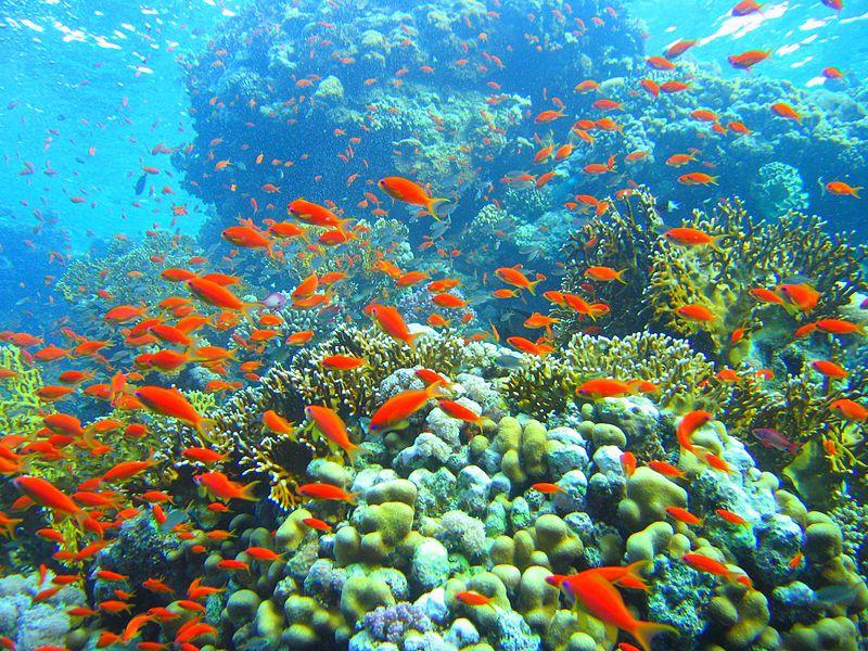 بالصور صور شرم الشيخ , جنة حقيقية على الارض مليئة بالمناظر الخلابة 2273 6
