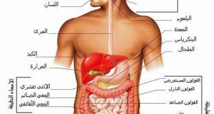 صور الجهاز الهضمي , ابداع الخالق فى جسم الانسان